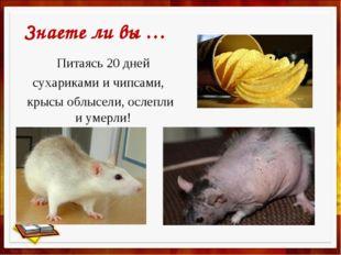 Питаясь 20 дней сухариками и чипсами, крысы облысели, ослепли и умерли! Знае
