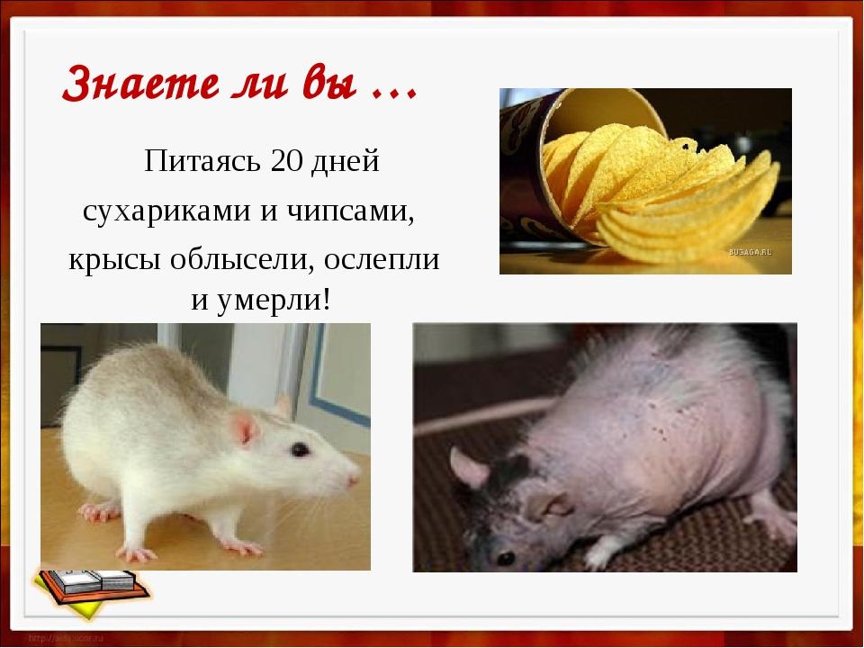 Питаясь 20 дней сухариками и чипсами, крысы облысели, ослепли и умерли! Знае...