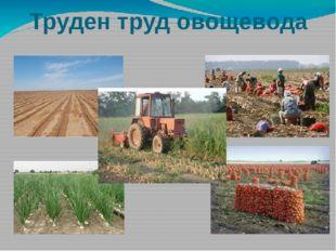 Труден труд овощевода