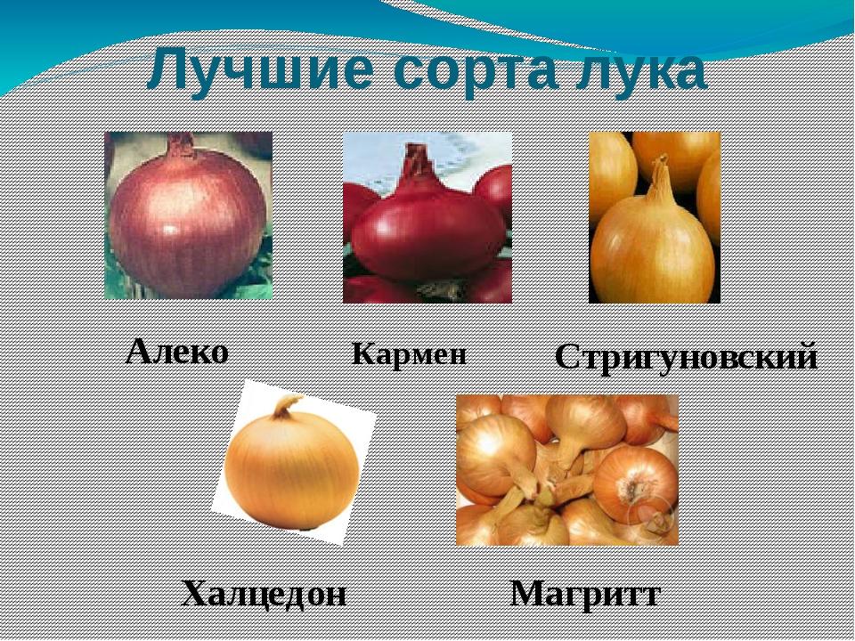 Лучшие сорта лука Алеко Кармен Стригуновский Халцедон Магритт