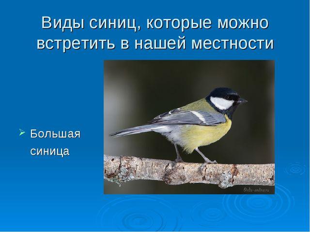 Виды синиц, которые можно встретить в нашей местности Большая синица
