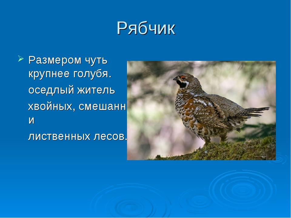 Рябчик Размером чуть крупнее голубя. оседлый житель хвойных, смешанных и л...