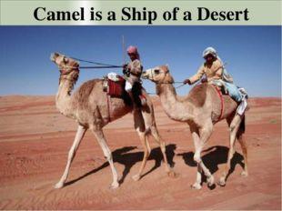 Camel is a Ship of a Desert