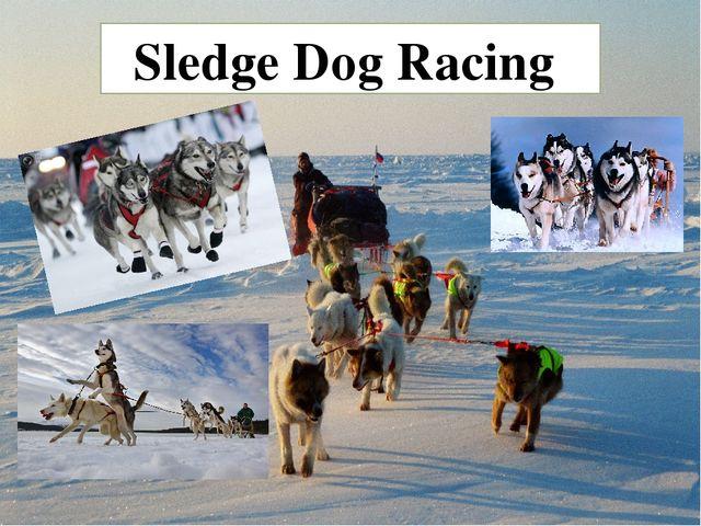 Sledge Dog Racing