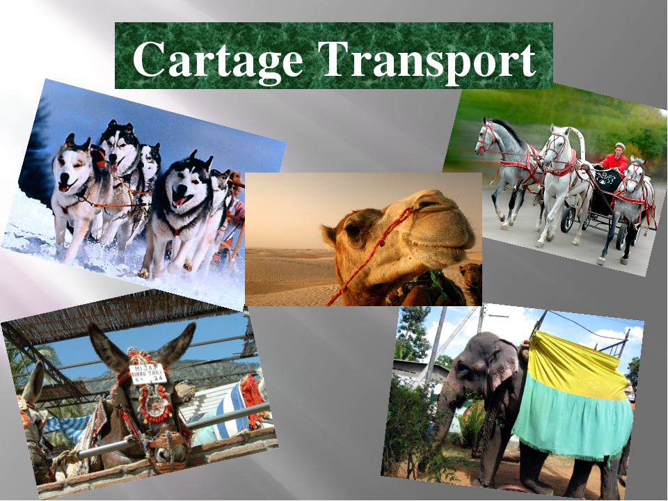 Cartage Transport