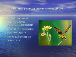 Венчик ( совокупность лепестков) Самой заметной частью цветка является – ВЕНЧ
