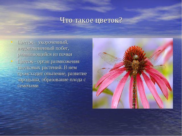 Что такое цветок? Цветок – укороченный, видоизмененный побег, развивающийся и...