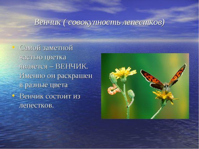 Венчик ( совокупность лепестков) Самой заметной частью цветка является – ВЕНЧ...