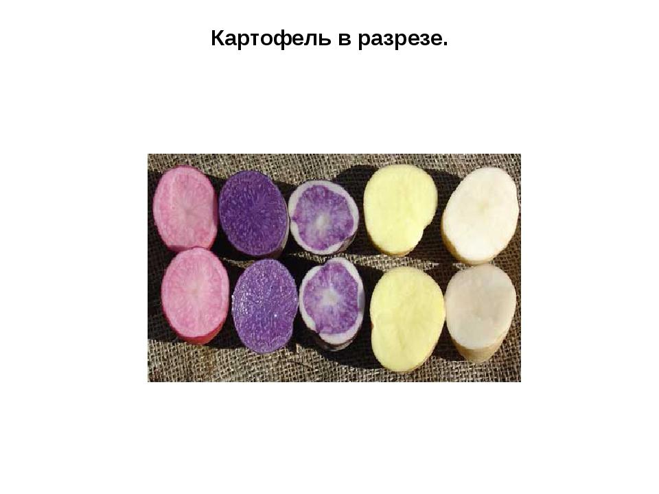 Картофель в разрезе.