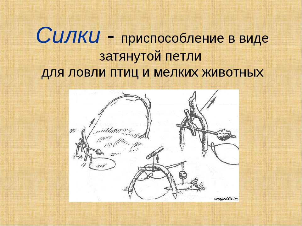 Силки - приспособление в виде затянутой петли для ловли птиц и мелких животных
