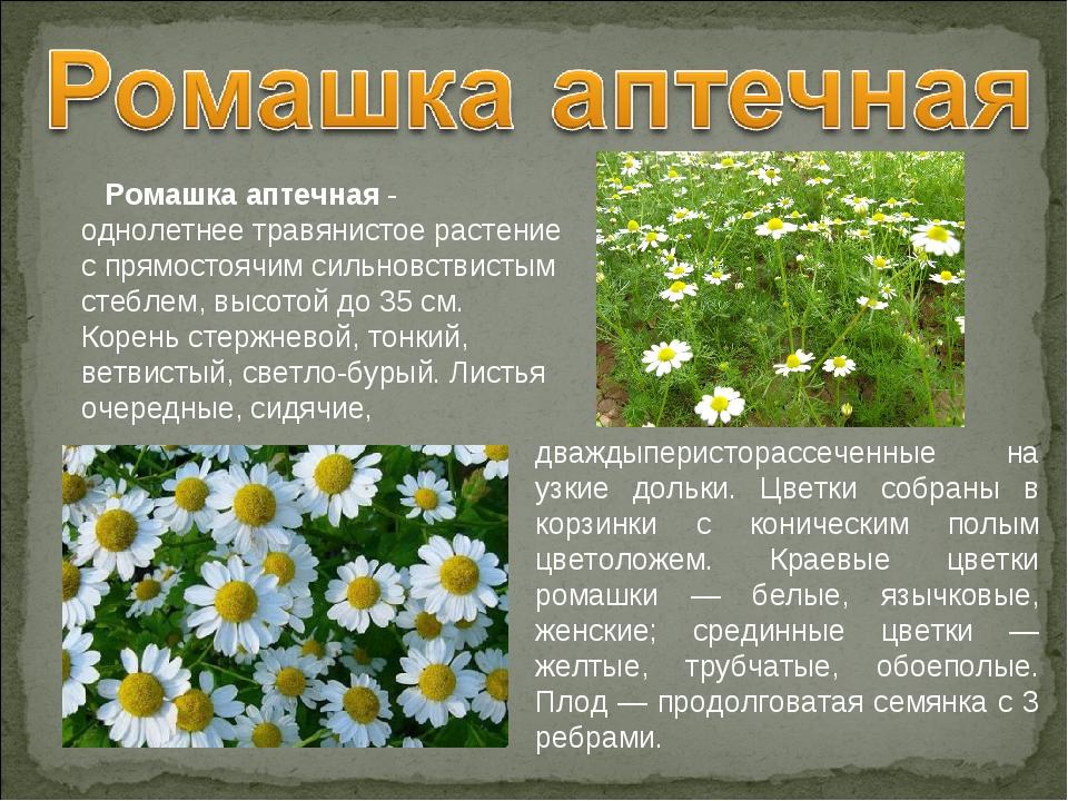 Лекарственные растения нижегородской области фото и описание