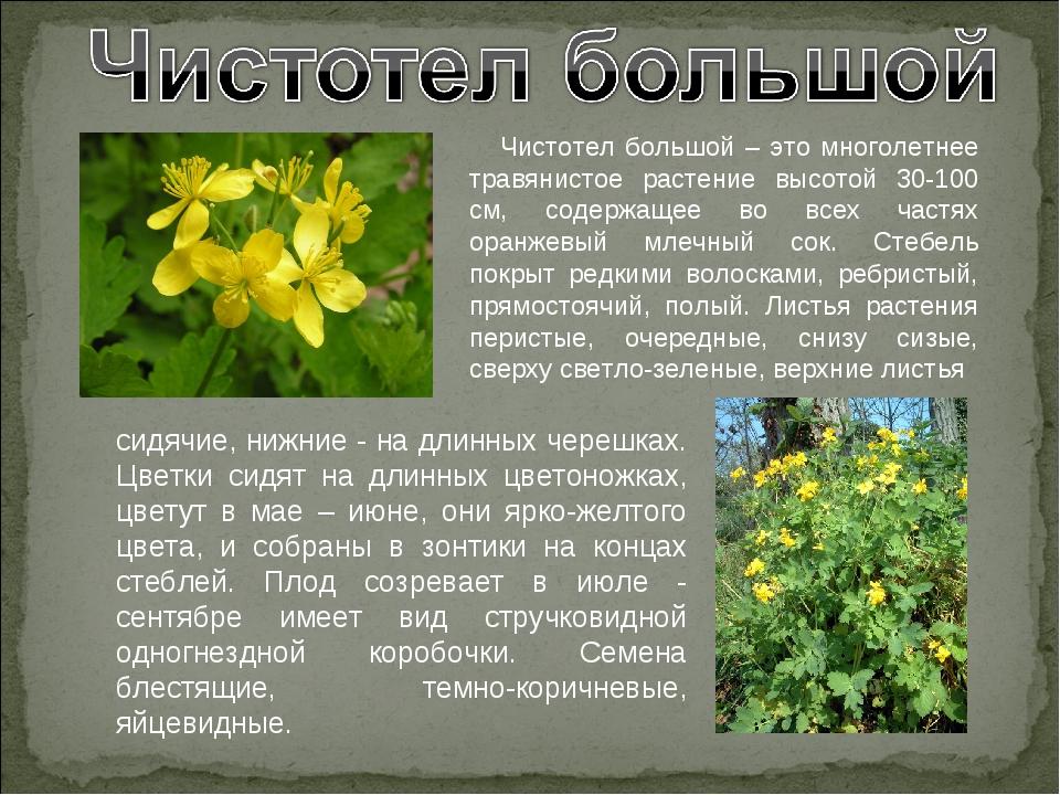 Лекарственные растения самарской области фото и описание