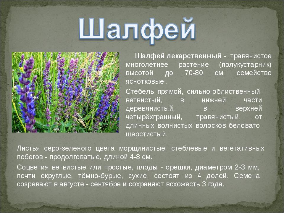 лекарственные растения нижегородской области фото и описание работает фотоэпилятор, как