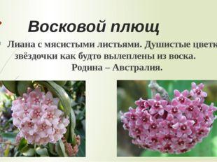 Интернет- ресурсы и литература http://www.kartinki24.ru/kartinki/flowers/9486
