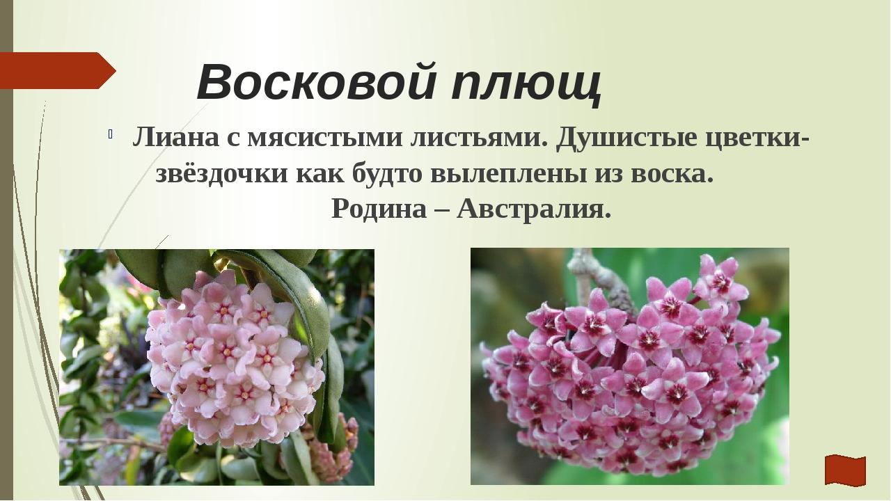 Интернет- ресурсы и литература http://www.kartinki24.ru/kartinki/flowers/9486...