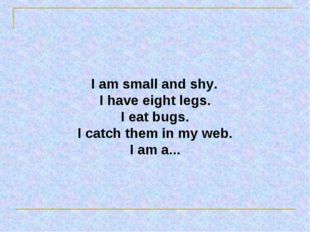 I am small and shy. I have eight legs. I eat bugs. I catch them in my web. I