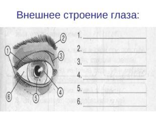 Внешнее строение глаза: