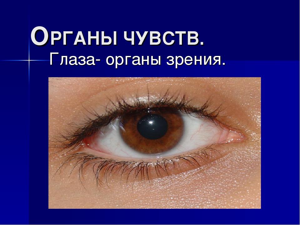 ОРГАНЫ ЧУВСТВ. Глаза- органы зрения.