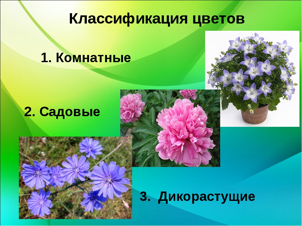 Классификация цветов 1. Комнатные 2. Садовые 3. Дикорастущие