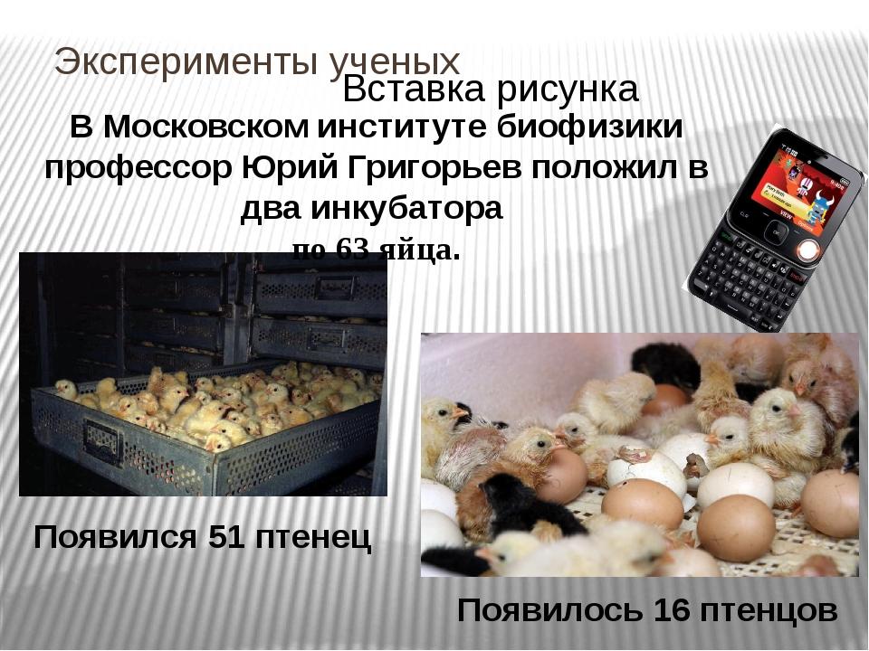 Эксперименты ученых В Московском институте биофизики профессор Юрий Григорьев...