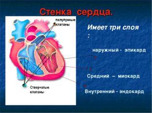 Стенка сердца. 1 2 3 Внутренний - эндокард   Средний – миокард  наружный