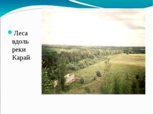 Леса вдоль реки Карай