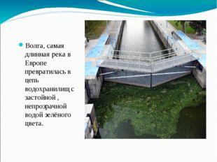 Волга, самая длинная река в Европе превратилась в цепь водохранилищ с застойн