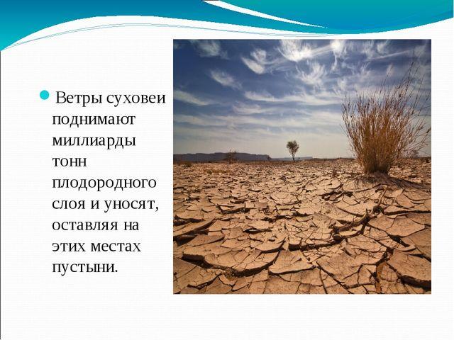 Ветры суховеи поднимают миллиарды тонн плодородного слоя и уносят, оставляя н...