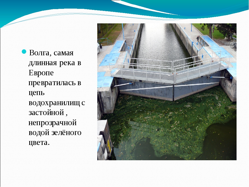 Волга, самая длинная река в Европе превратилась в цепь водохранилищ с застойн...