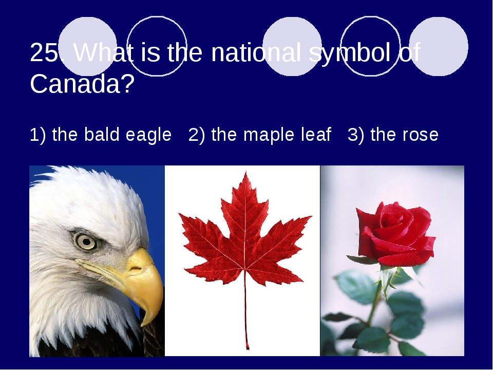 25. What is the national symbol of Canada? 1) the bald eagle 2) the maple lea...