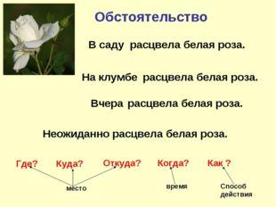 Обстоятельство расцвела белая роза. расцвела белая роза. расцвела белая роза.