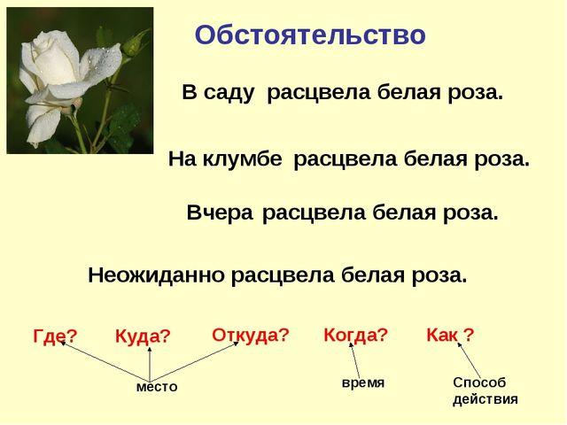 Обстоятельство расцвела белая роза. расцвела белая роза. расцвела белая роза....