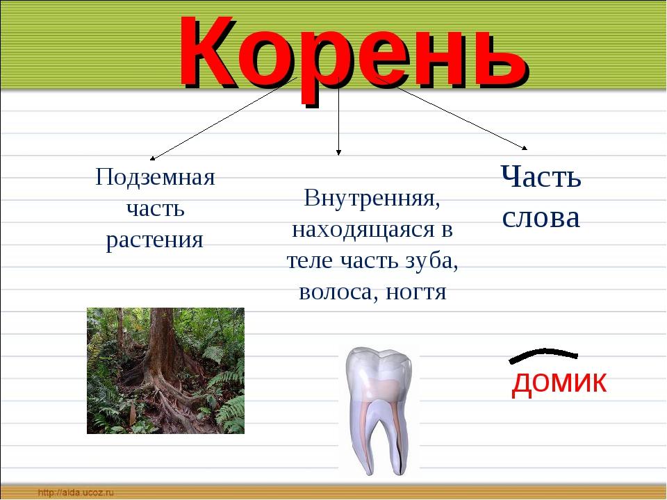 Корень Подземная часть растения Внутренняя, находящаяся в теле часть зуба, в...