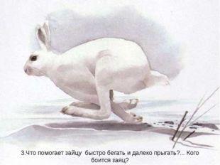 3.Что помогает зайцу быстро бегать и далеко прыгать?... Кого боится заяц?