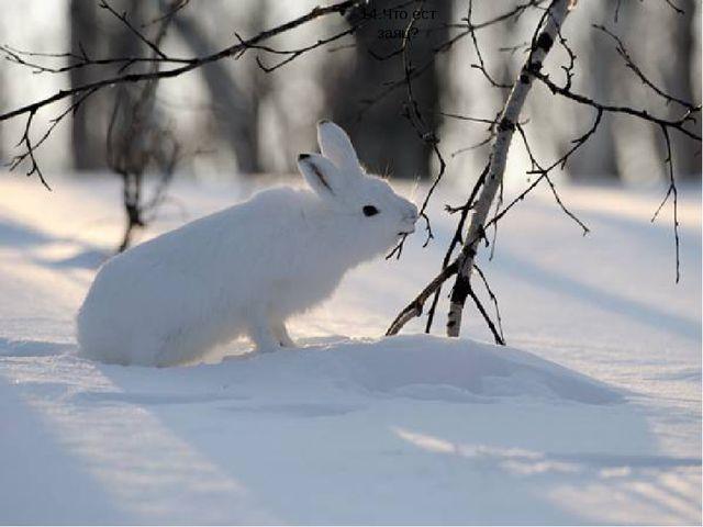 14.Что ест заяц?