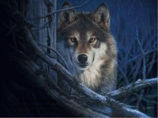6.Волки едят зайцев, нападают на кабанов, оленей, лосей.