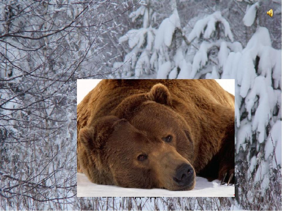 12.А медведь?