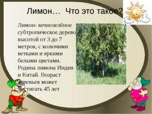 Лимон… Что это такое? Лимон- вечнозелёное субтропическое дерево высотой от 3