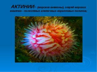 АКТИНИИ- (морские анемоны), отряд морских кишечно - полостных клеточных корал
