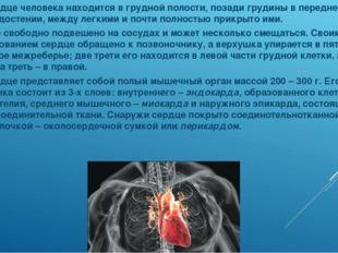 Сердце человека находится в грудной полости, позади грудины в переднем средос