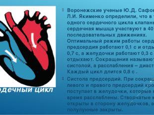 Сердечный цикл Воронежские ученые Ю.Д. Сафонов и Л.И. Якименко определили, чт