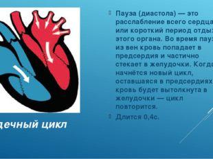 Сердечный цикл Пауза (диастола) — это расслабление всего сердца, или короткий