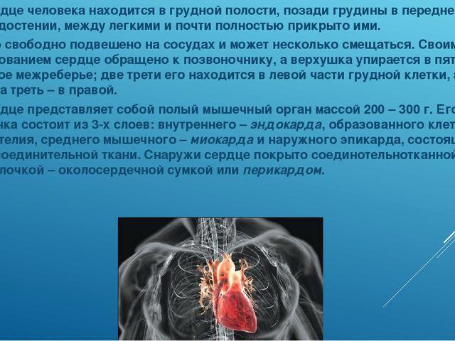 Сердце человека находится в грудной полости, позади грудины в переднем средос...