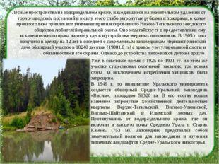 Лесные пространства на водораздельном кряже, находившиеся на значительном уда