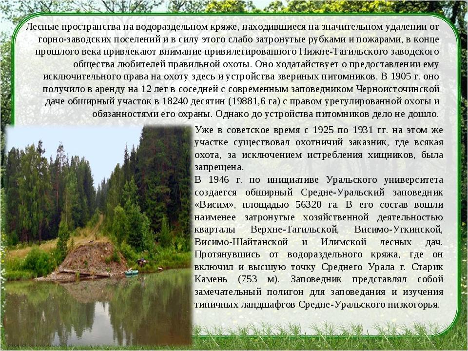 Лесные пространства на водораздельном кряже, находившиеся на значительном уда...