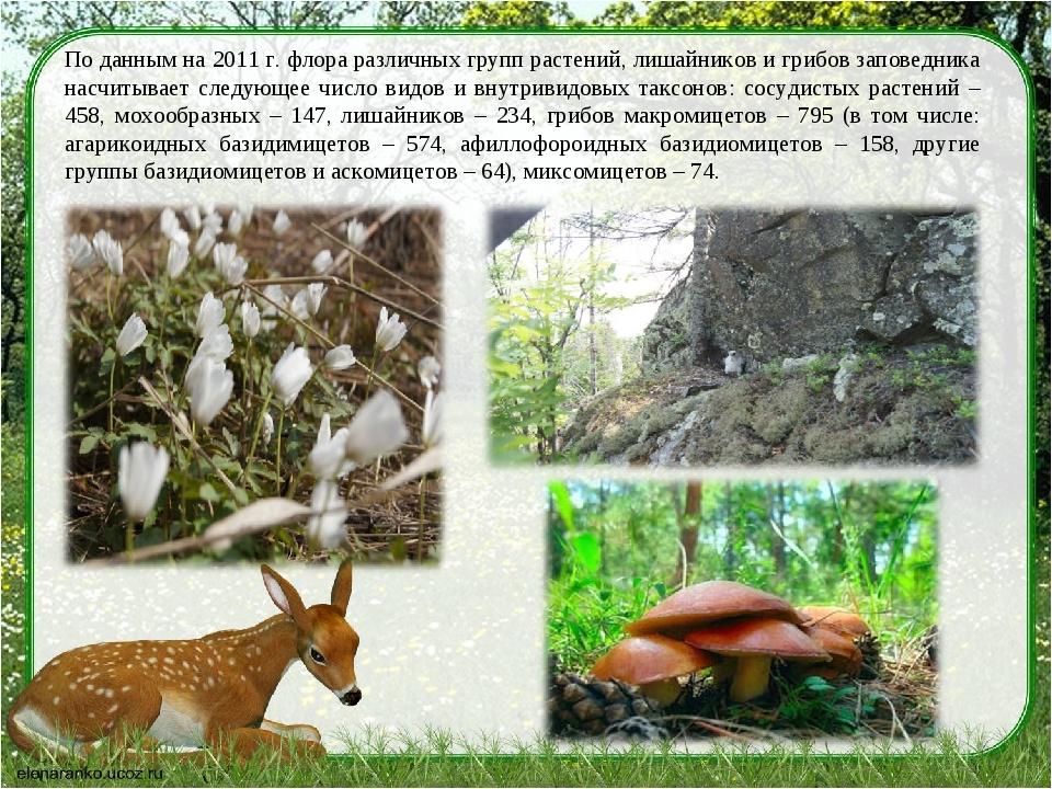 По данным на 2011 г. флора различных групп растений, лишайников и грибов запо...