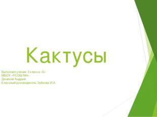 Кактусы Выполнил ученик 3 класса «Б» МБОУ «РСОШ №4» Денисов Андрей Классный р