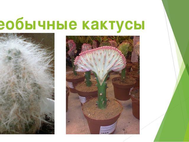 Необычные кактусы