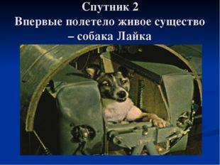 Спутник 2 Впервые полетело живое существо – собака Лайка