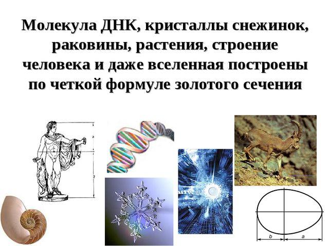 Молекула ДНК, кристаллы снежинок, раковины, растения, строение человека и даж...
